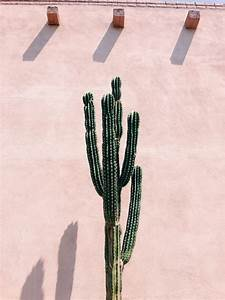 vsco desert botany hannahklemm