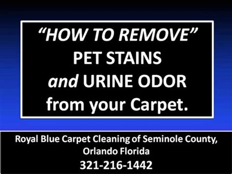 how to remove cat and urine odor from carpet remove