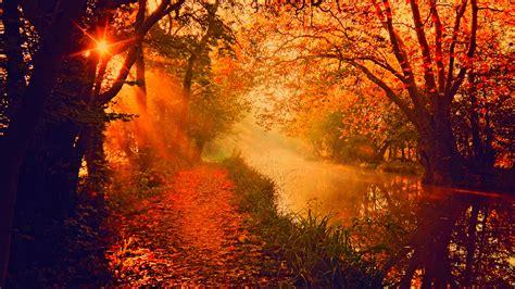 sun setting  autumn forest  ultra hd wallpaper