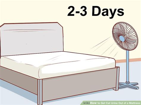 how to get urine out of a mattress how to get cat urine out of a mattress with pictures