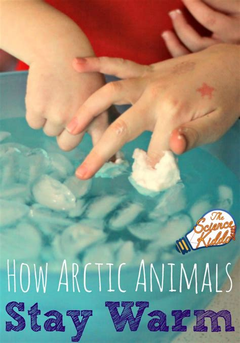arctic animals stay warm  science kiddo