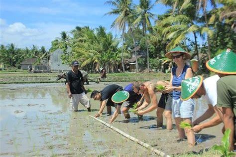 belajar kebudayaan  wisata desa tembi rumah budaya jogja