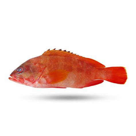 grouper lbs range lobster