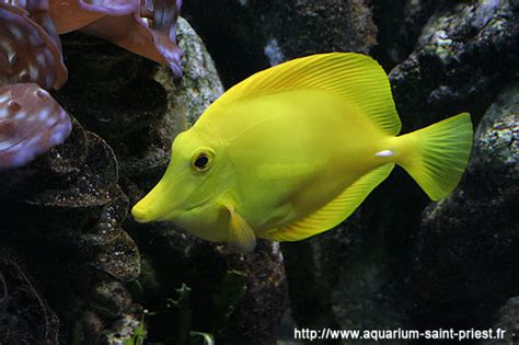 l aquarium de steph 224 priest galerie photo