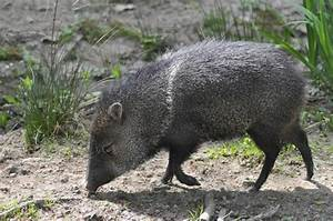 9 animals you might not know are native to the U.S. | MNN ...