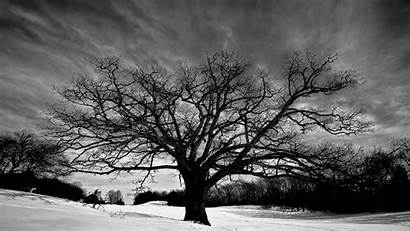 Tree Oak Background Pixelstalk