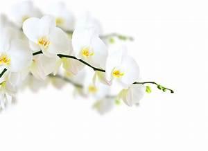 Blumen Und Ihre Bedeutung : wei e blumen ihre bedeutung und symbolik blog floraqueen deutschland ~ Frokenaadalensverden.com Haus und Dekorationen