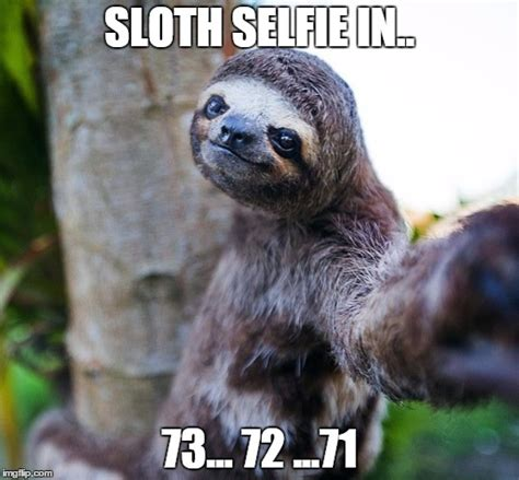 Sloth Meme Generator - why we don t see a lot of sloth selfies imgflip