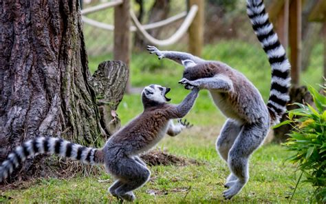 jigsaw puzzles wild animals amazoncouk appstore