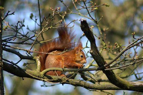jeux pour fille gratuit de cuisine écureuil roux dans un arbre