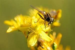 Wie Vertreibe Ich Wespen : wespen alarm warum wespen so wichtig wie bienen sind ~ Orissabook.com Haus und Dekorationen