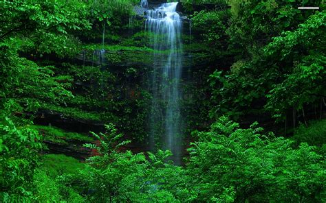 Green Forest Picture Hd by Waterfall Grass Green Forest Wallpapers Waterfall Grass