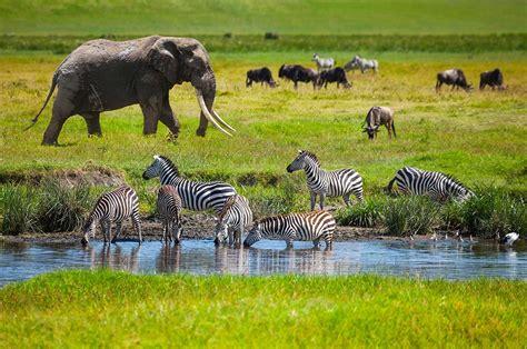 7 Days Classic Tanzania Wildlife Safari   Tanzania Safaris