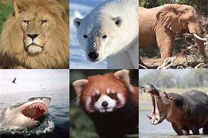 What does the term 'endangered species' really mean ...