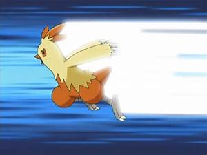 Image - May Combusken Quick Attack.png - The Pokémon Wiki
