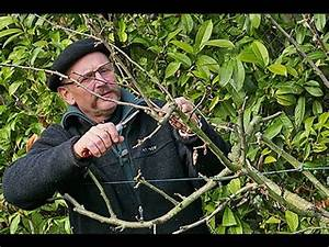 Comment Tailler Un Pommier : comment bien tailler les arbres fruitiers taille trigemme ~ Dode.kayakingforconservation.com Idées de Décoration