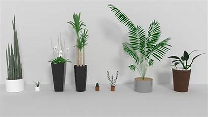 Plants Indoor 3d Models Plant Cgtrader Similar