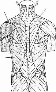Common Anatomical Terms And Diagrams