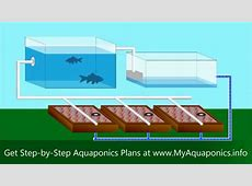 ULTIMATE Backyard Aquaponics Design! How to Build an