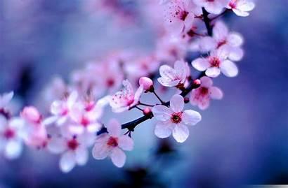 Pretty Flowers Blossom Cherry Names Blossoms Tx