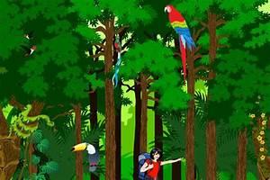 The 25  Best Rainforest Facts Ideas On Pinterest
