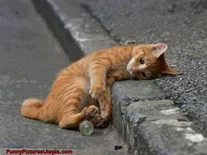 Cute Cat Exhausted By Play - Funny Cat Pictures - See ...