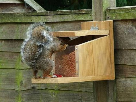 building squirrel feeder woodworking projects plans