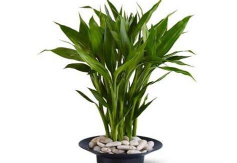 plante de bureau feng shui 28 images le feng shui se
