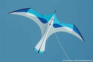 62 Best Images About Bird Kites On Pinterest