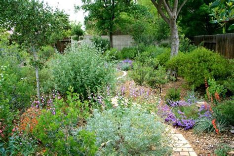 california plant gardens native plant garden in bakersfield