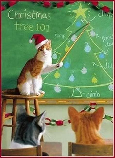 Cat Christmas Tree Meme - christmas tree 101 funny christmas pictures dump a day
