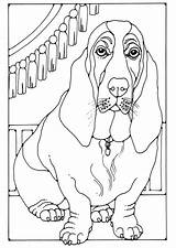 Coloring Basset Dog Hound Puppy Dogs Colouring Edupics Adult Bloodhound Sheets Colour Printable Pdf Legs Short Hi Res sketch template