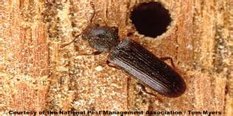 pantry pests  rid  stored product bugs pests