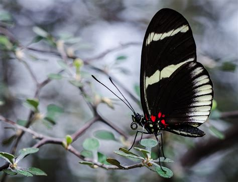 Botanischer Garten Kiel Schmetterlinge 2018 by Schmetterling Botanischer Garten Kiel Foto Bild Tiere