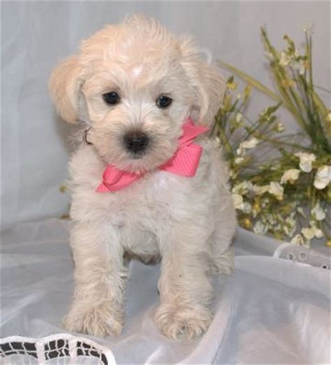 schnoodles images  pinterest cats animals
