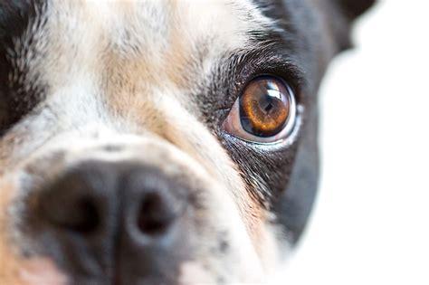 sind hunde wirklich farbenblind schnueffelfreunde