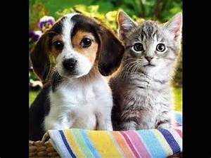 Funny Cat and Dog Love Videos - Funny Cat and Dog Love ...