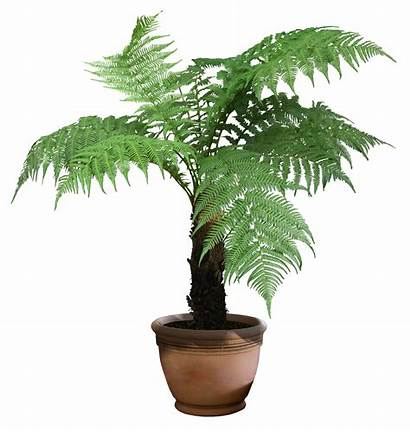 Transparent Plants Fern Trees Greenery Clipart Backgrounds