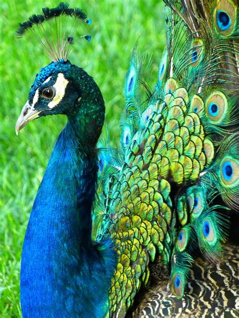 birds links paper gifts  estefany