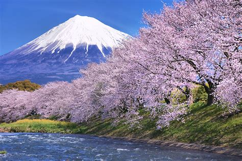 Cherry Blossom Hd Wallpaper Photographing Sakura In Japan Scenic Spots Pro Photography Tips 1