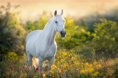 horse blind horses eye diseases insights light equine farm flowers information guide caring poppy portrait breeds loving brooks dr basic