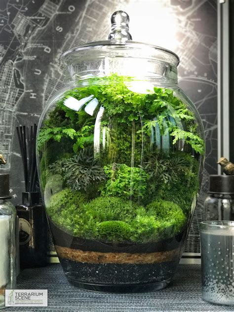 Mini Terrarium Glas by Terrarium Terrarium Terrarium Garden Terrarium