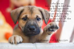 Puppy Dogs Quotes