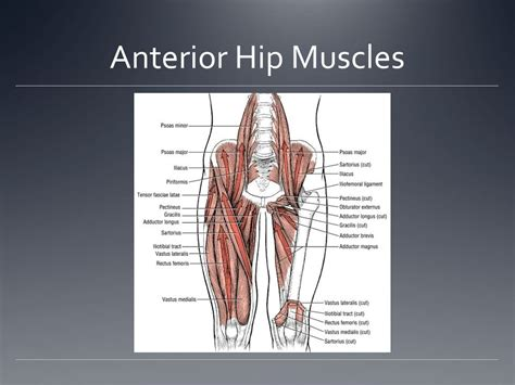 How To Stretch The Anterior Deltoid