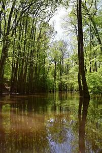 South Carolina: Paddling Cedar Creek in Congaree National ...