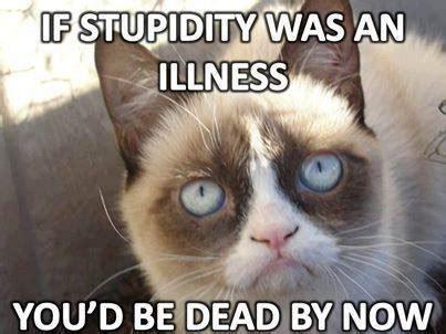 New Cat Meme - 9 new grumpy cat memes