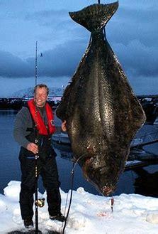 inoffizieller heilbutt weltrekord fisch fang