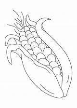 Corn Coloring Pages Sweet Printable Stalk Drawing Colouring Indian Field Very Shocks Stalks Template Apple Preschool Food Getcolorings Banana Sketch sketch template