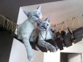 cat bridge cat bridge indiana jones cat bridge by catastrophicreations