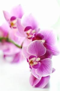 Schöne Orchideen Bilder : sch ne blumen foto bild pflanzen pilze flechten bl ten kleinpflanzen orchideen ~ Orissabook.com Haus und Dekorationen